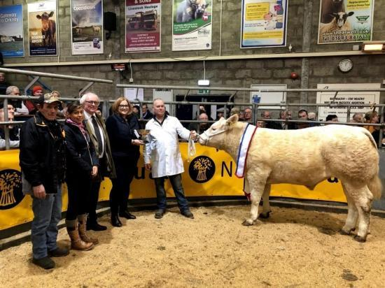 Photograph of Quality show forward at Caithness Christmas show and sale