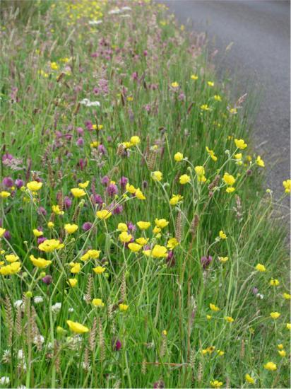 Photograph of Gold Medallists Sought For Blooming Road Verges