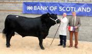 Thumbnail for article : Dingwall & Highland Marts Ltd - Bull Sales - 19th April 2017 - Overall Champion Photo