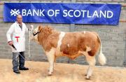 Thumbnail for article : Dingwall & Highland Marts Ltd - Bull Sales - 19th April 2017 - Reserve Champion Photo