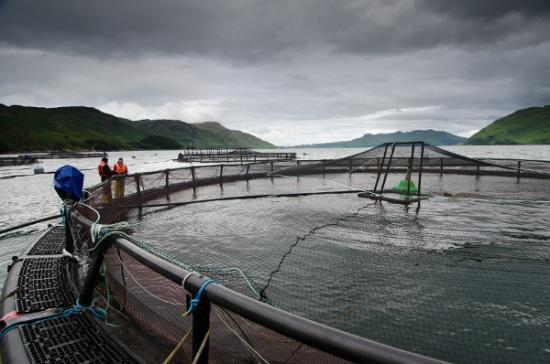 Photograph of Aquaculture supply chain £1m innovation fund open