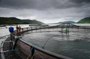 Thumbnail for article : Aquaculture supply chain £1m innovation fund open