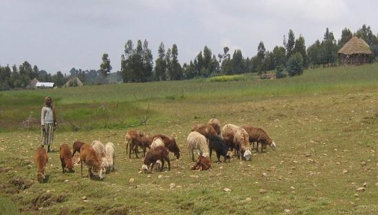 Photograph of New SRUC Research Validates Traditional Healers' Claims Over Parasite Infections In Ethiopia