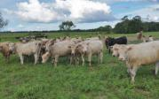 Thumbnail for article : Dingwall & Highland Marts Ltd - Sale 4 July 2017