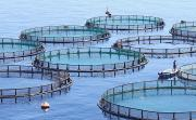 Thumbnail for article : Scottish Expertise Goes On Show At World's Biggest Aquaculture Technology Fair