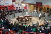 Thumbnail for article : Dingwall & Highland Marts Ltd - Sale 23 January 2018