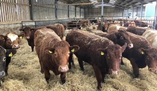 Photograph of Dingwall & Highland Marts Ltd -Sale 5 March 2019