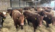 Thumbnail for article : Dingwall & Highland Marts Ltd -Sale 5 March 2019